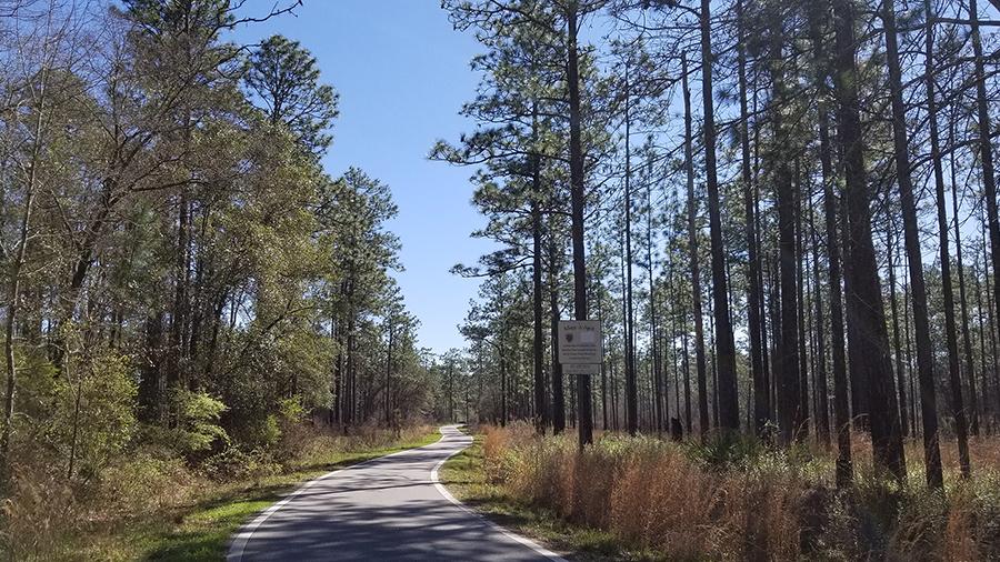 Blackwater River Primitive Recreation Site, Holt FL