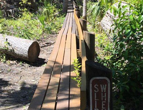Highlands Hammock State Park, Sebring FL
