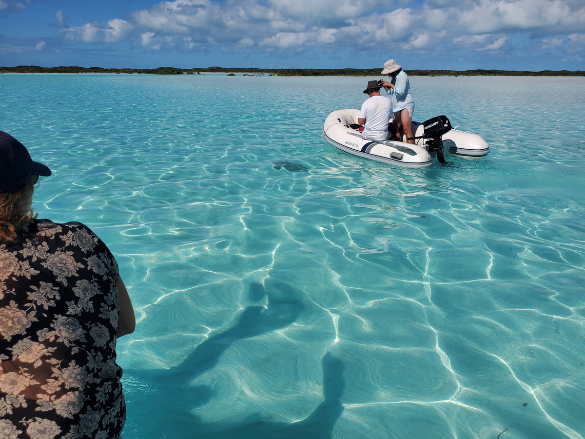 Shroud Cay, Exumas - Going up the dinghy river