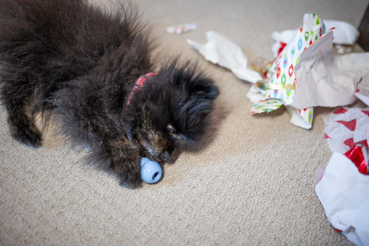 Pebbles got a Christmas present too!