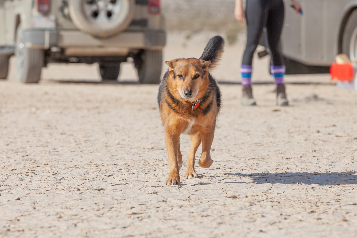 Lexy enjoying the dried out lakebed in California.