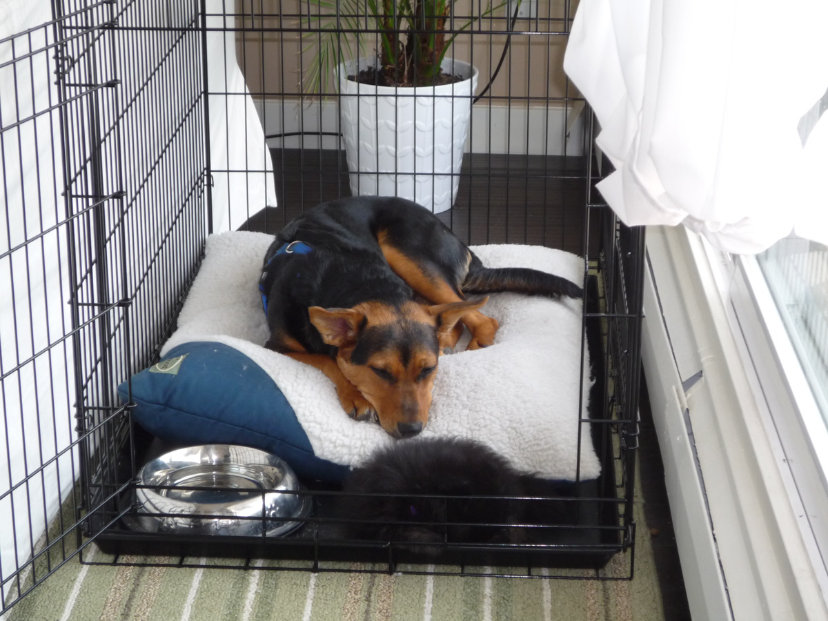 Lexy and Pebbles sleeping in Lexy's crate.